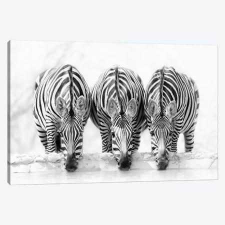 Zebras Canvas Print #OXM5160} by Henry Zhao Canvas Artwork