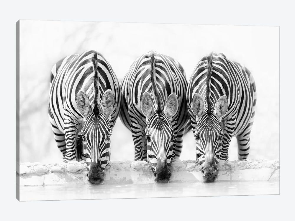 Zebras by Henry Zhao 1-piece Canvas Artwork