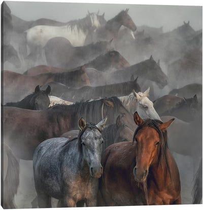 Two Horses Canvas Art Print