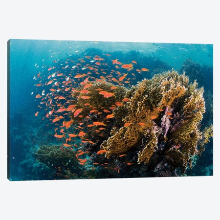 Reefscape Canvas Print #OXM5174} by Ilan Ben Tov Canvas Artwork