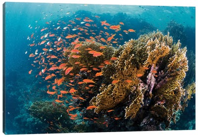 Reefscape Canvas Art Print