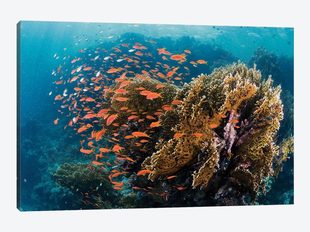 Reefscape by Ilan Ben Tov 1-piece Art Print