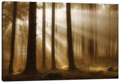 Autumn Light Canvas Art Print