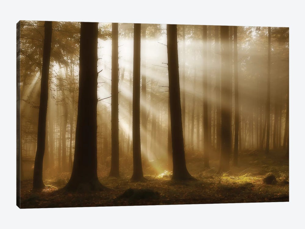 Autumn Light by Irmawarth 1-piece Canvas Print
