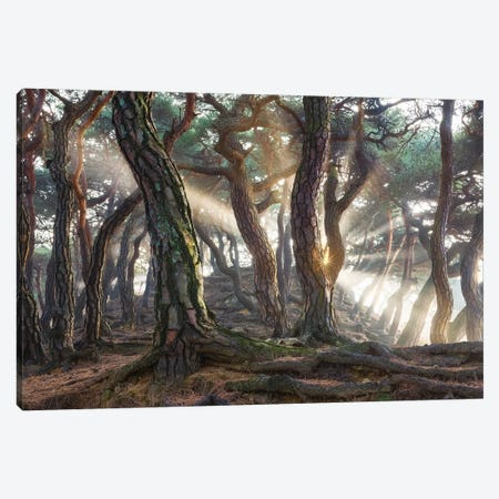 Sacred Pine Trees Canvas Print #OXM5183} by Jaeyoun Ryu Canvas Wall Art