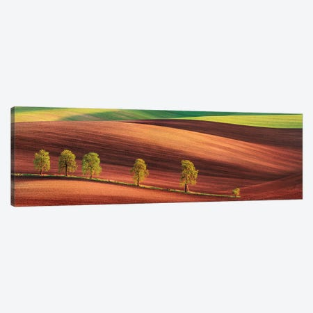 Odyssey Of An Avenue Ii Canvas Print #OXM5188} by Jan Smíd Master Canvas Wall Art