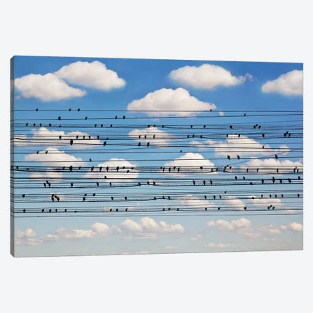 Cantus Arcticus - Concerto For Birds 3-Piece Canvas #OXM5190} by Jared Lim Canvas Print