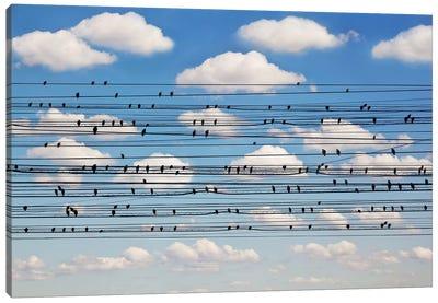 Cantus Arcticus - Concerto For Birds Canvas Art Print