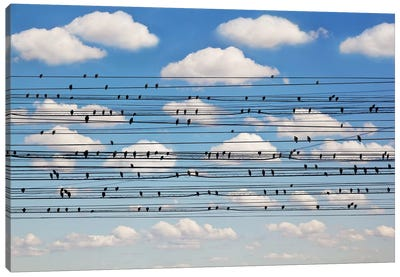 Cantus Arcticus - Concerto For Birds Canvas Art Print