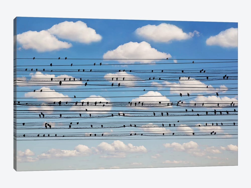 Cantus Arcticus - Concerto For Birds by Jared Lim 1-piece Art Print