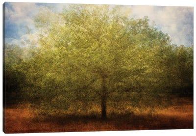 Embrace Me Canvas Art Print