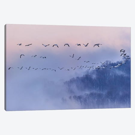 Snow Geese Canvas Print #OXM522} by Austin Li Canvas Art Print