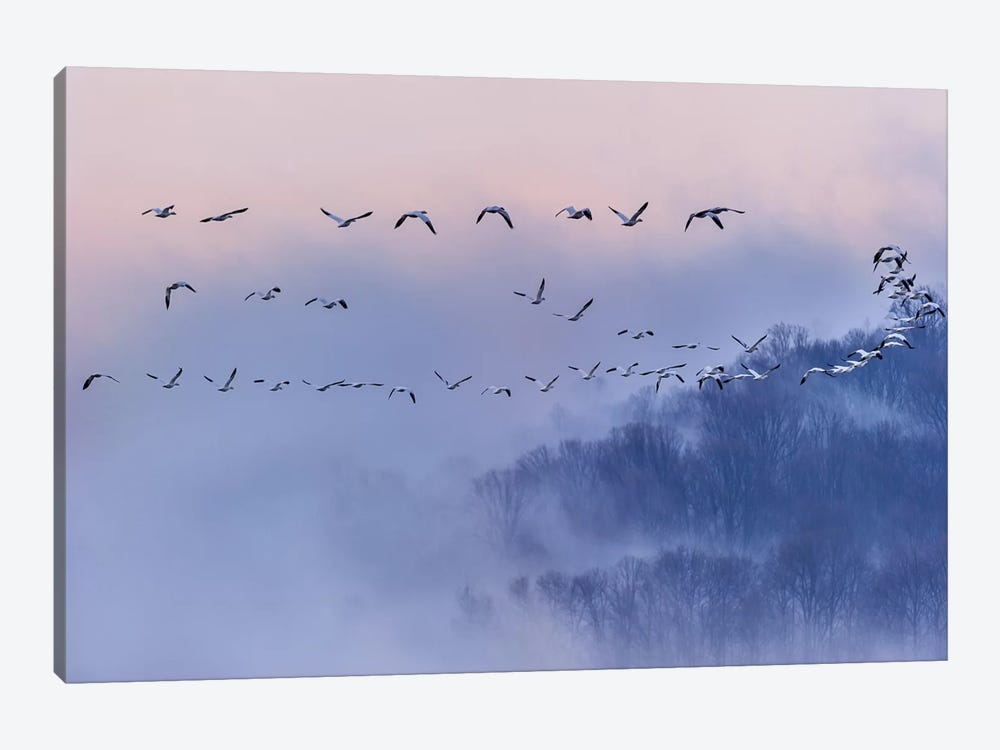 Snow Geese by Austin Li 1-piece Canvas Art Print