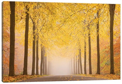 Autumn Road Canvas Art Print
