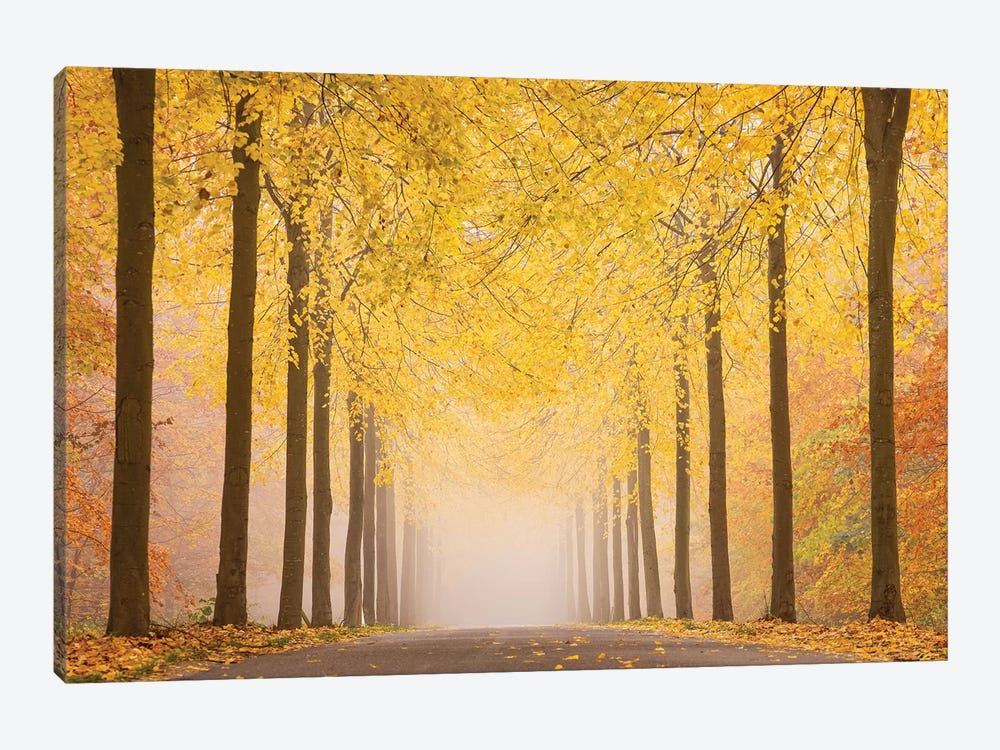 Autumn Road by keller 1-piece Canvas Wall Art