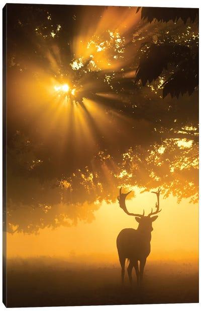 Mist On Tree Can'T Stop Sunshine Canvas Art Print