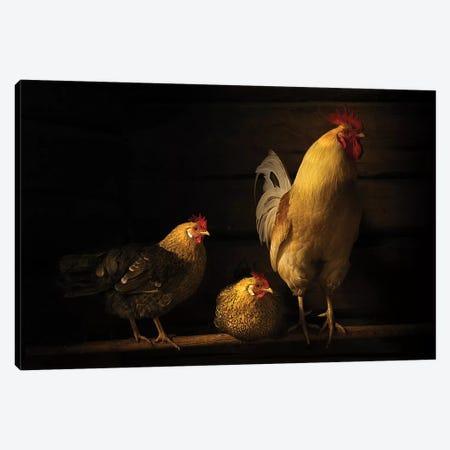 Farm Animals Canvas Print #OXM5243} by Lars Anker-Rasch Art Print