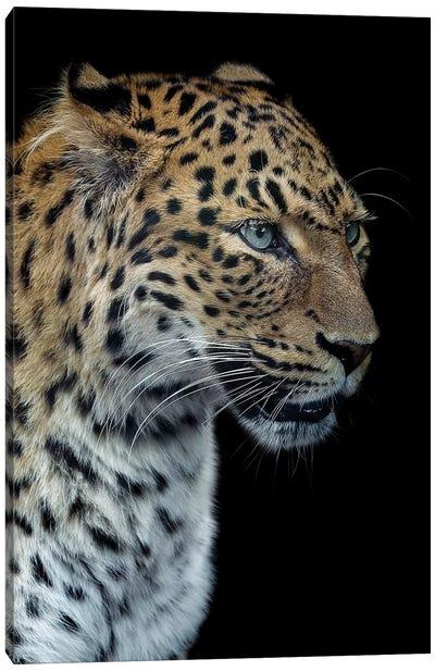 Panthere Portrait Version 2.0 Canvas Art Print