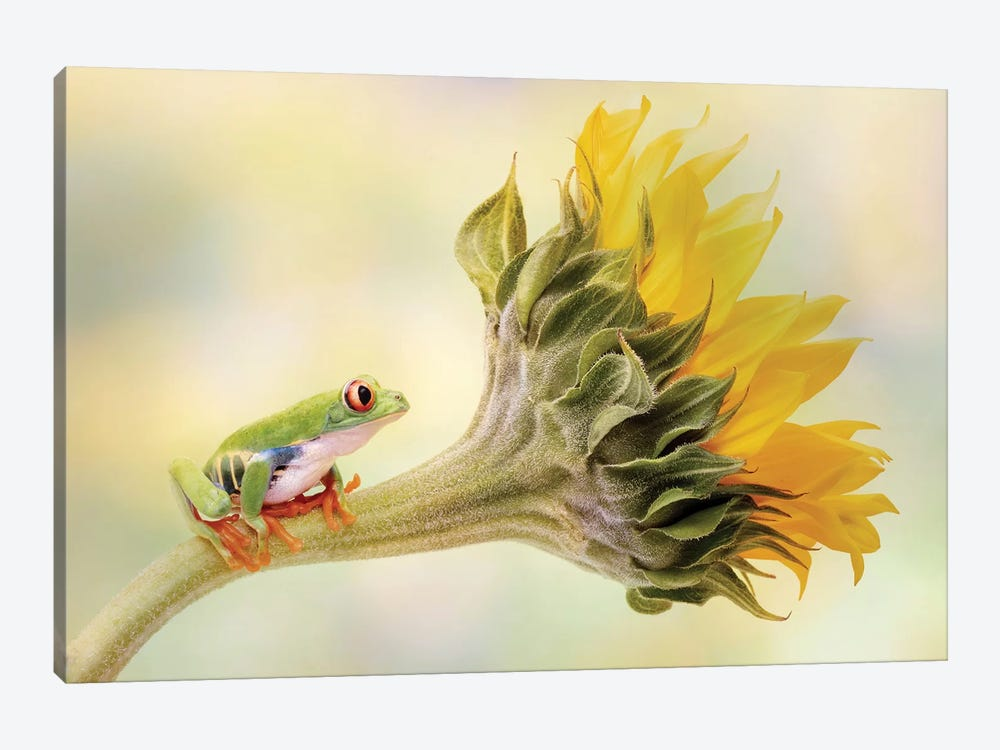 Red Eyed Tree Frog On A Sunflower by Linda D Lester 1-piece Canvas Artwork