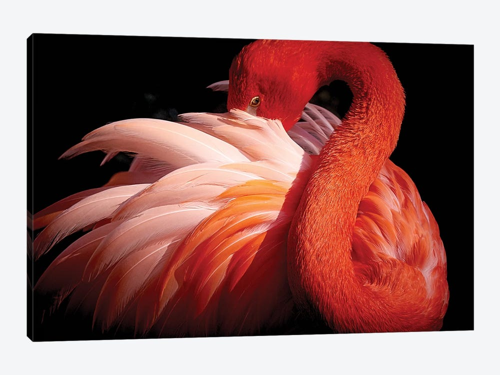 Flamingo by Makoto Nishikura 1-piece Canvas Artwork