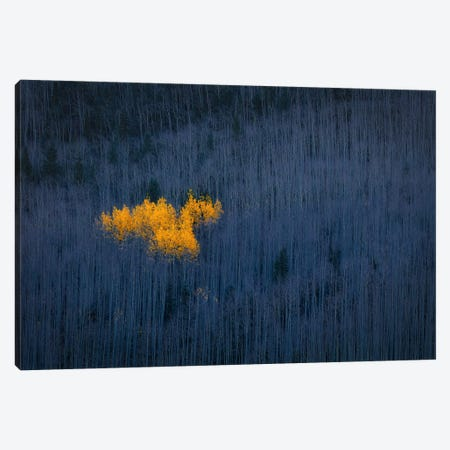 Heart Of Aspens Canvas Print #OXM5284} by Michael Zheng Canvas Artwork
