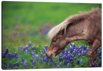 Spring Is In The Air... Canvas Art Print