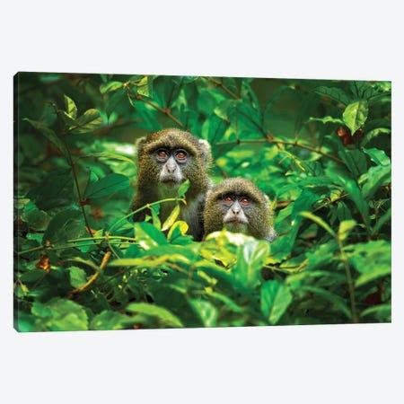 Blue Monkey Canvas Print #OXM5293} by Milan Zygmunt Canvas Wall Art