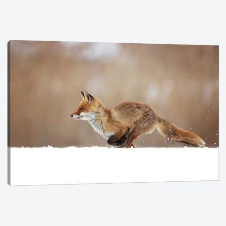 Red Fox 3-Piece Canvas #OXM5297} by Milan Zygmunt Canvas Print