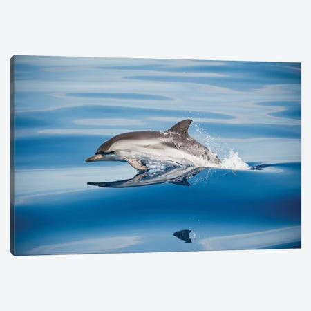 Striped Dolphin 3-Piece Canvas #OXM5301} by Mirko Ugo Canvas Artwork