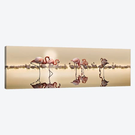 Flamingos Canvas Print #OXM5304} by Nasser Osman Canvas Art Print