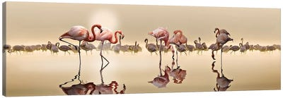 Flamingos Canvas Art Print
