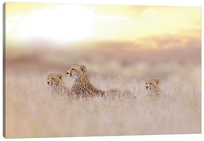 Cheetah Family Canvas Art Print