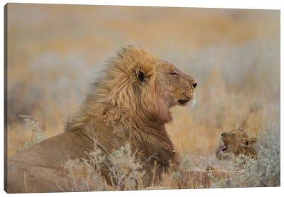 Male Lion With Cub Canvas Art Print