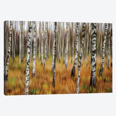 3D Birches Canvas Print #OXM5317} by Par Soderman Canvas Artwork