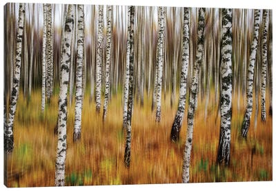 3D Birches Canvas Art Print