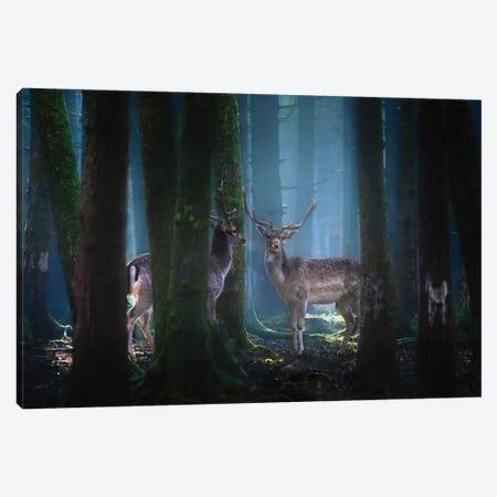 Deers Canvas Print #OXM5318} by Patrick Aurednik Art Print