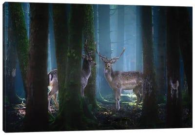 Deers Canvas Art Print