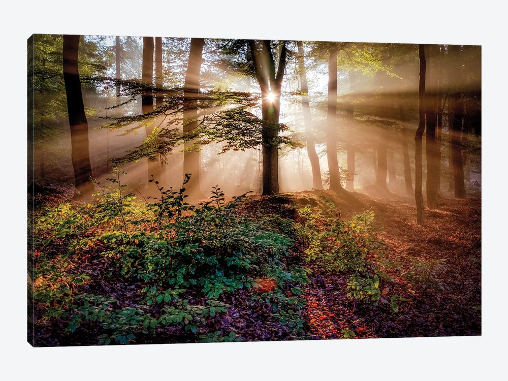 Magical Forest by Peter Bijsterveld 1-piece Canvas Art