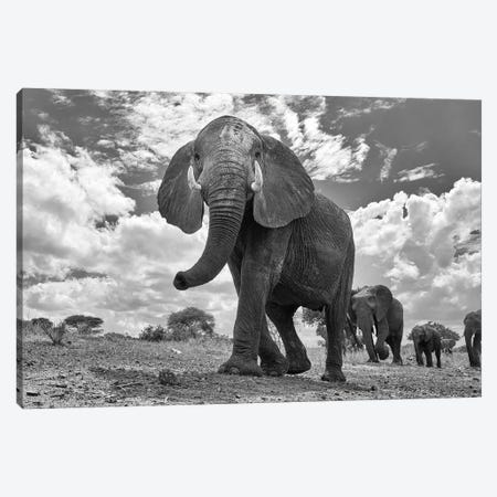 Matriarch March Canvas Print #OXM5326} by Peter Hudson Canvas Print