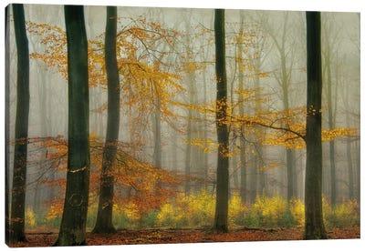 The Latest Autumn Colors Canvas Art Print
