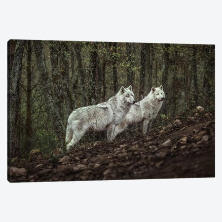 Meeting With White Wolves Canvas Print #OXM5359} by Ronan Siri Canvas Art Print