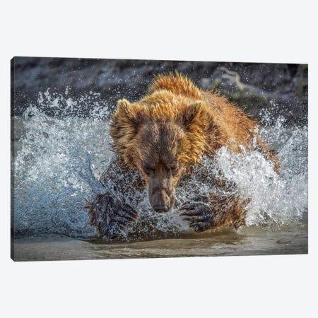 Bear Action Canvas Print #OXM5361} by Roshkumar Canvas Art