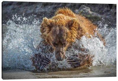 Bear Action Canvas Art Print