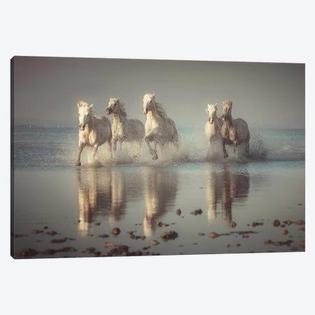Camargue Horses Canvas Print #OXM5364} by Rostovskiy Anton Art Print