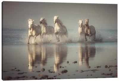 Camargue Horses Canvas Art Print