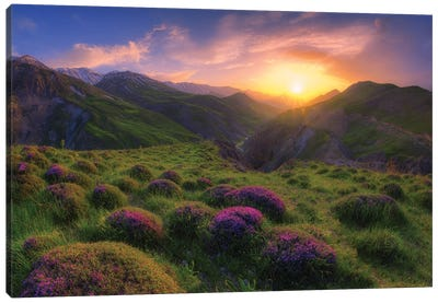 Spring In Show Canvas Art Print