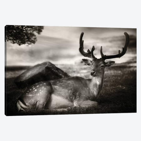 Resting Bambi 3-Piece Canvas #OXM5373} by Sandra Štimac Canvas Print