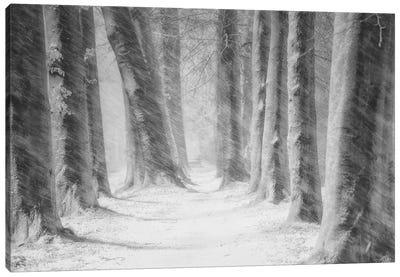 Blowing Snow Canvas Art Print