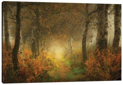 Dream Forest Canvas Art Print