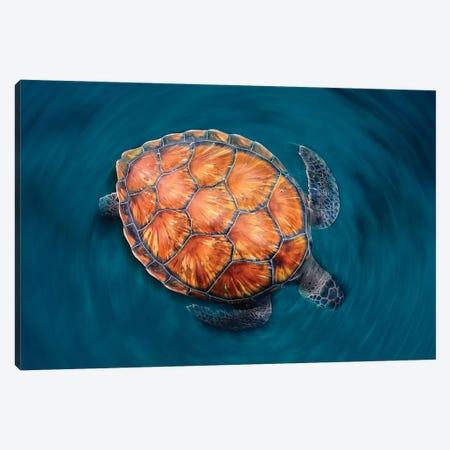 Spin Turtle Canvas Print #OXM5386} by Sergi Garcia Art Print